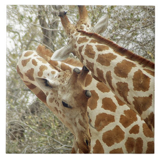 Niger, Koure, two Giraffes in bushes in the west Tile