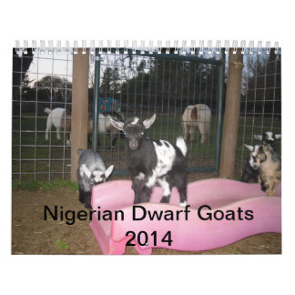 nigerian dwarf goat 2014 calender calendar