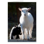 Nigerian Dwarf Goats on the Picnic Table Greeting Card