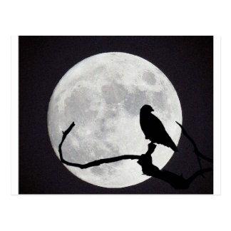 Night Hawk Postcard