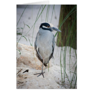 Night Heron Card
