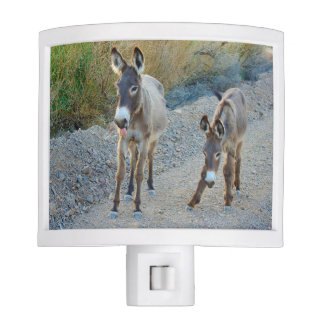 Night Light, wildlife, burros, wild donkeys Night Lites