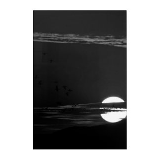 Night Moon Birds Black Wall Art
