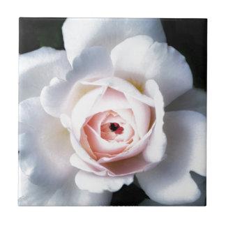 Night Rose Tile