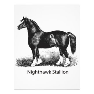 Nighthawk StallionProduct Selected Multiple Custom Letterhead