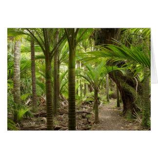 Nikau Palms, Heaphy Track, near Karamea, Card
