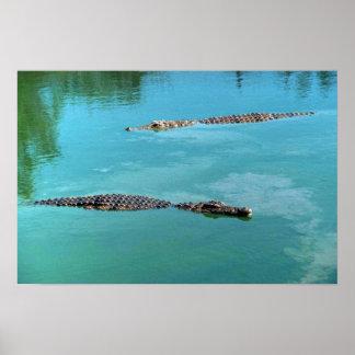 Nile Crocodiles Poster