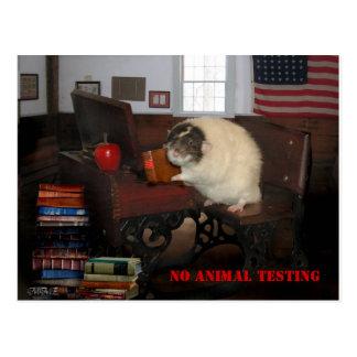 No Animal Testing Postcard