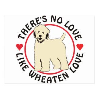 No Love Like Wheaten Love Postcard