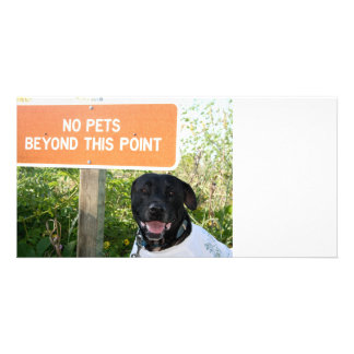 no pets with dog sign at beach funny animal image photo cards