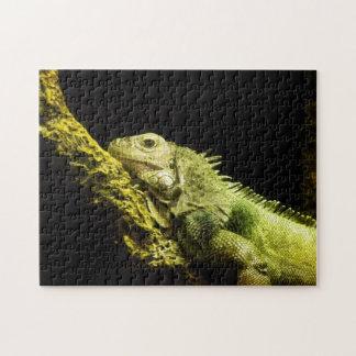 Noble Iguana Puzzle