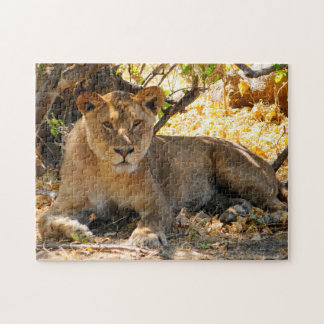 Noble Lions of Africa. Jigsaw Puzzle