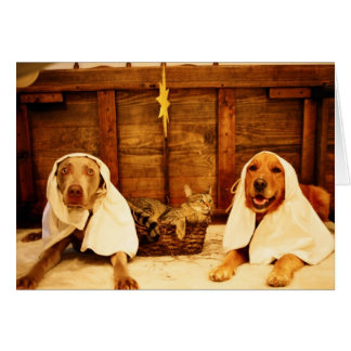 Noël de chien carte de vœux