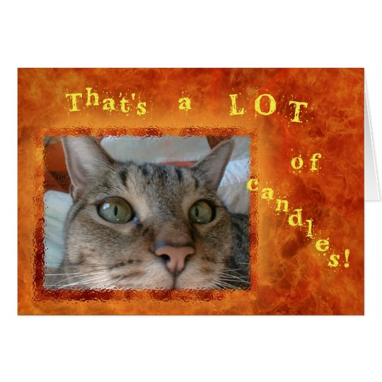 Nomad the Cat's View Happy Birthday Card
