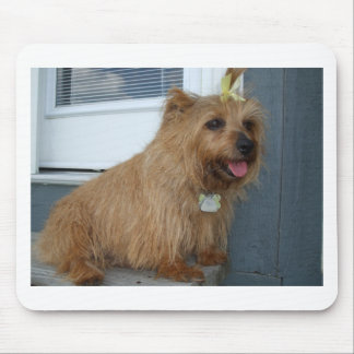Norfolk terrier sitting mouse pad