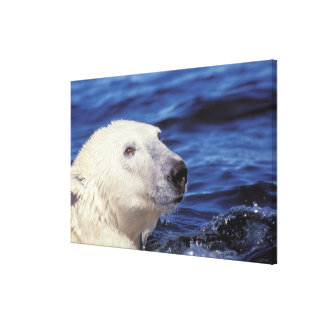North America, Arctic Circle. Polar bear Stretched Canvas Print