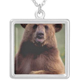 North America, California, cinnamon Black bear Silver Plated Necklace