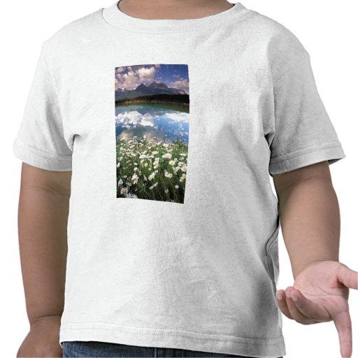 North America, Canada, Alberta, Banff National 2 Tees