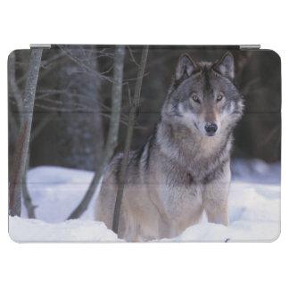 North America, Canada, Eastern Canada, Grey wolf iPad Air Cover