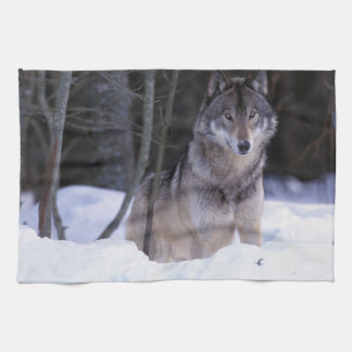 North America, Canada, Eastern Canada, Grey wolf Kitchen Towel