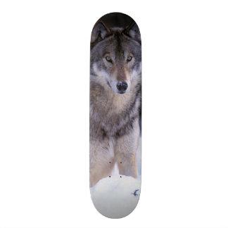 North America, Canada, Eastern Canada, Grey wolf Custom Skate Board