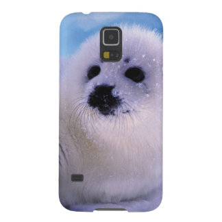North America, Canada, Gulf of St. Lawrence. 2 Galaxy S5 Covers
