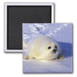 North America, Canada, Gulf of St. Lawrence. 4 Fridge Magnet