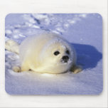 North America, Canada, Gulf of St. Lawrence. 4 Mouse Pad