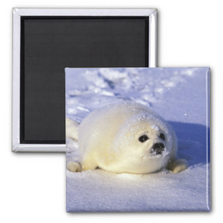 North America, Canada, Gulf of St. Lawrence. 4 Square Magnet