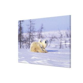 North America, Canada, Manitoba, Churchill. 7 Gallery Wrapped Canvas