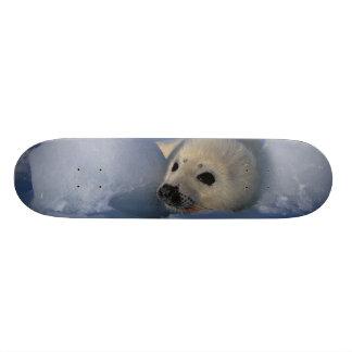 North America, Canada, Quebec, Iles de la 2 Custom Skateboard