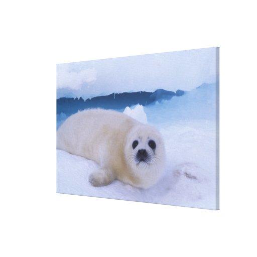 North America, Canada, Quebec, Iles de la Stretched Canvas Prints