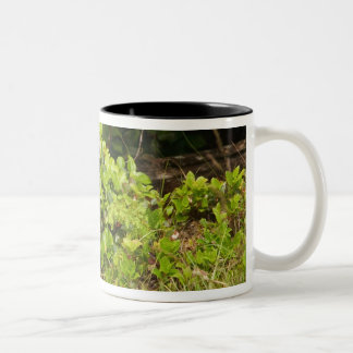 North America, Canada, Queen Charlotte 2 Two-Tone Coffee Mug