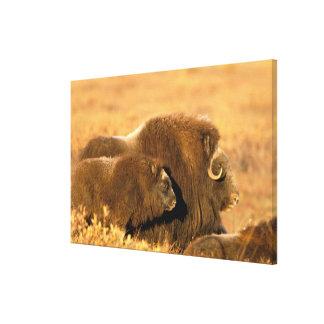 North America, USA, Alaska, Arctic National Stretched Canvas Print