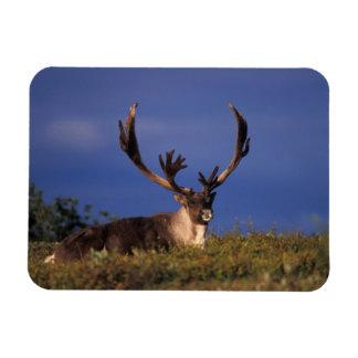 North America, USA, Alaska, Denali National Rectangular Photo Magnet