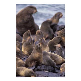 North America, USA, Alaska. Endangered Photographic Print