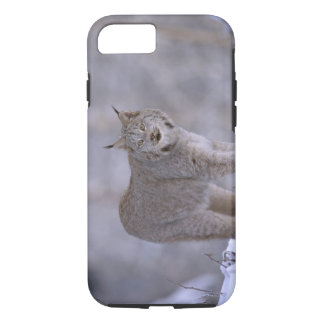 North America, USA, Alaska, Haines. Lynx (Felis iPhone 7 Case