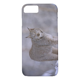 North America, USA, Alaska, Haines. Lynx (Felis iPhone 7 Case