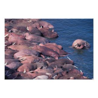 North America, USA, Alaska, Round Island, Art Photo