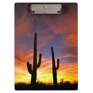 North America, USA, Arizona, Sonoran Desert. Clipboard