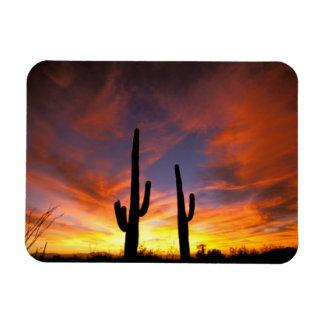 North America, USA, Arizona, Sonoran Desert. Rectangular Photo Magnet