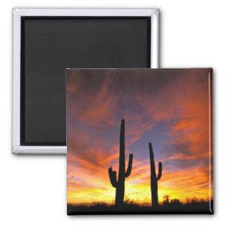 North America, USA, Arizona, Sonoran Desert. Square Magnet