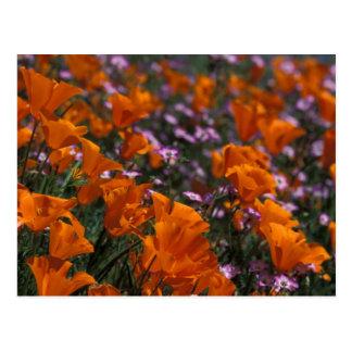 North America, USA, California, Antelope Valley, 2 Postcard