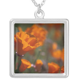 North America, USA, California, Antelope Valley, Silver Plated Necklace