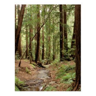 North America, USA, California, Big Sur, 3 Postcard