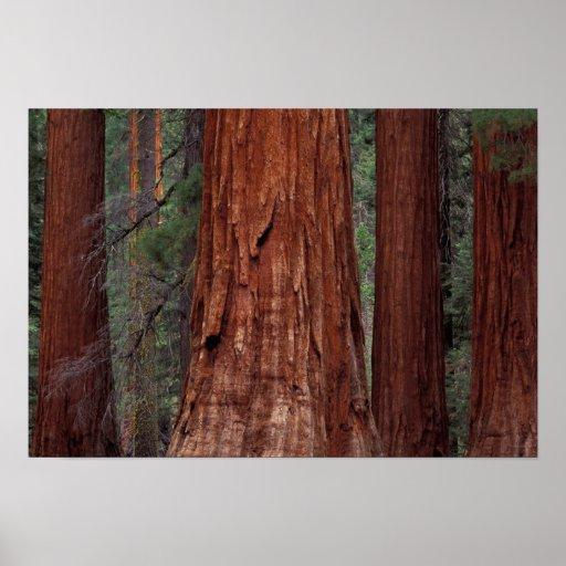 North America, USA, California, Yosemite NP, 2 Poster