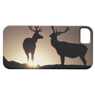 North America, USA, Colorado. Rocky Mountains Case For The iPhone 5