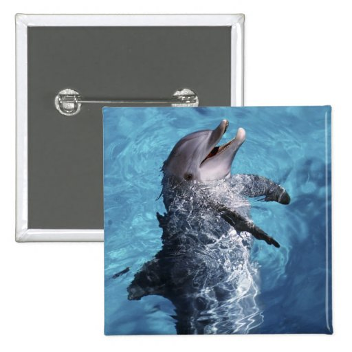 North America, USA, Hawaii. Dolphin 2 Pinback Buttons