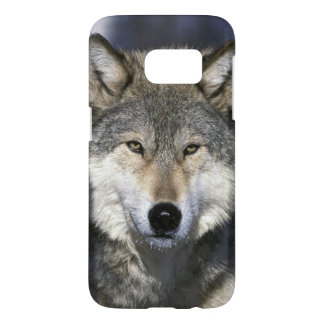 North America, USA, Minnesota. Wolf Canis 2 Samsung Galaxy S7 Case