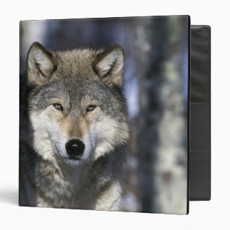 North America, USA, Minnesota. Wolf Canis 3 Ring Binders